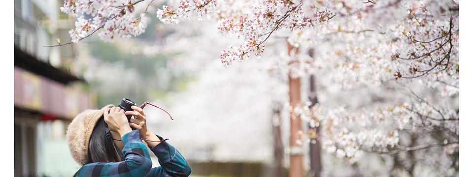 tokyo_tourist_cherry_blossoms