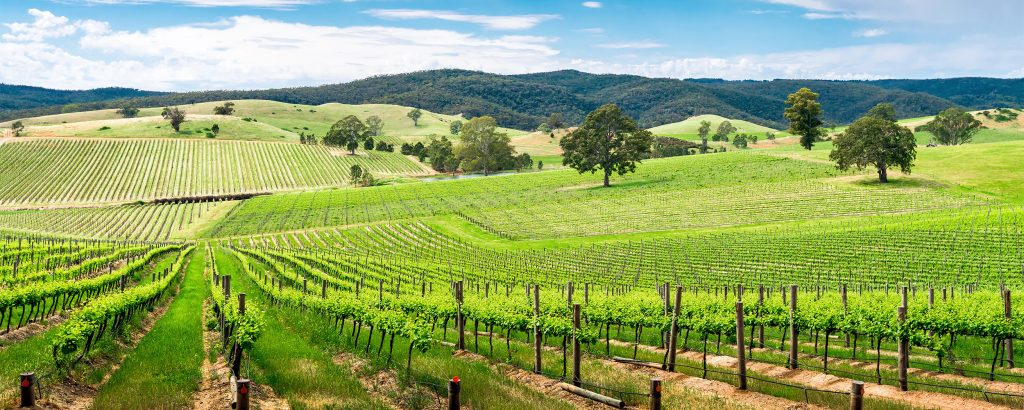 Barossa, Australia vineyard
