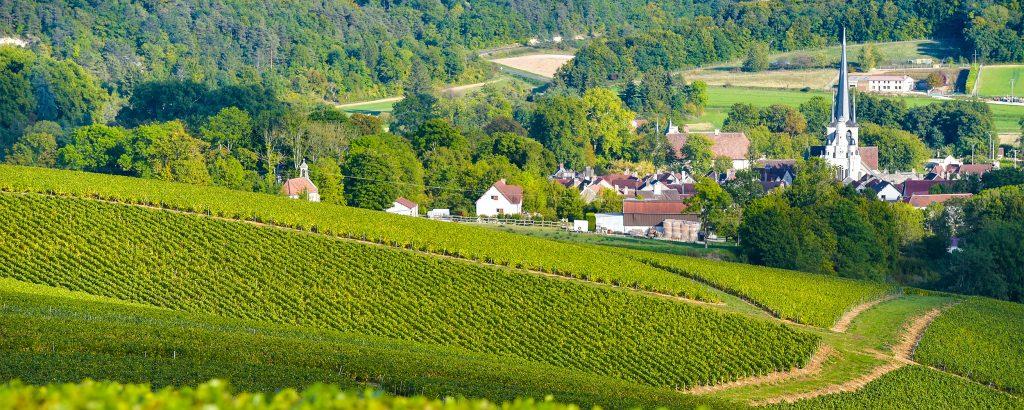 champagne vineyards in france