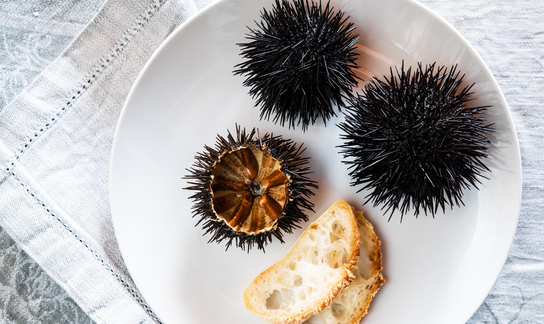 sea urchin delicacy